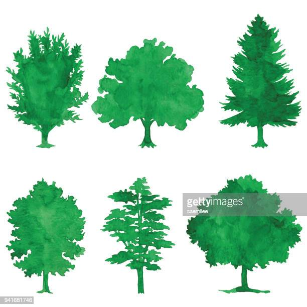 watercolor green trees - tree stock illustrations