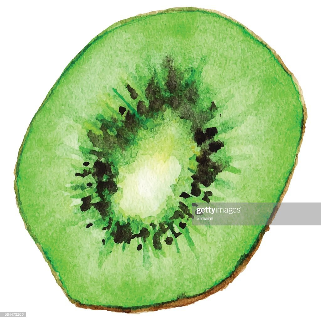 Watercolor half of exotic kiwifruit isolated vector