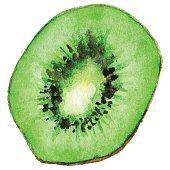 Watercolor half of exotic kiwifruit isolated vector