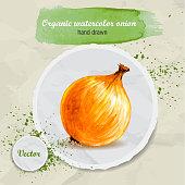 Watercolor hand drawn onion