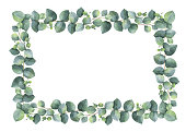 Watercolor hand painted vector rectangular frame with silver dollar eucalyptus.
