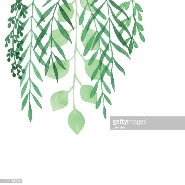 ilustrações, clipart, desenhos animados e ícones de fundo de plantas penduradas em aquarela - ramo parte de uma planta