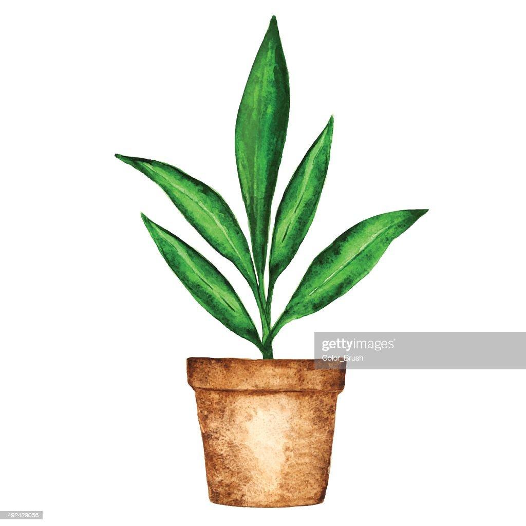 Aquarelle Plante Dinterieur Feuilles Vert Dans Un Pot De Fleur