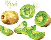 Watercolor Kiwi Fruit Isolated on White Background.