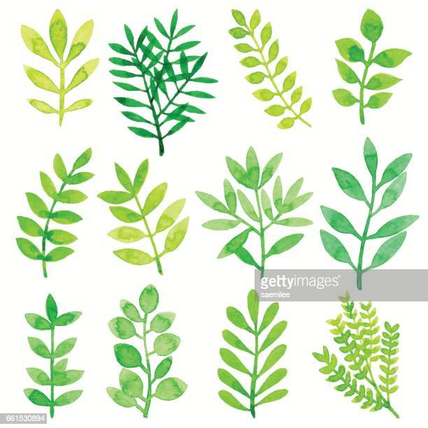 stockillustraties, clipart, cartoons en iconen met aquarel bladeren groen - bloem plant