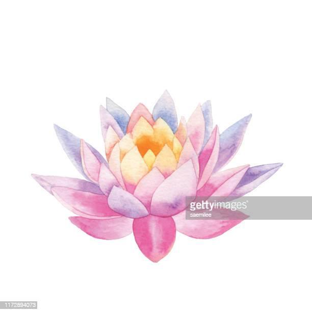 stockillustraties, clipart, cartoons en iconen met aquarel lotus - boeddhisme