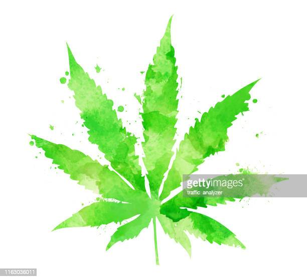 ilustrações, clipart, desenhos animados e ícones de folha da marijuana da aguarela - baseado