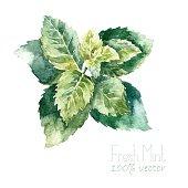 Watercolor mint.