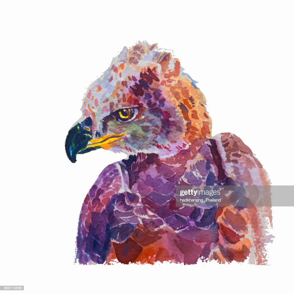 Watercolor of African crowned eagle on white