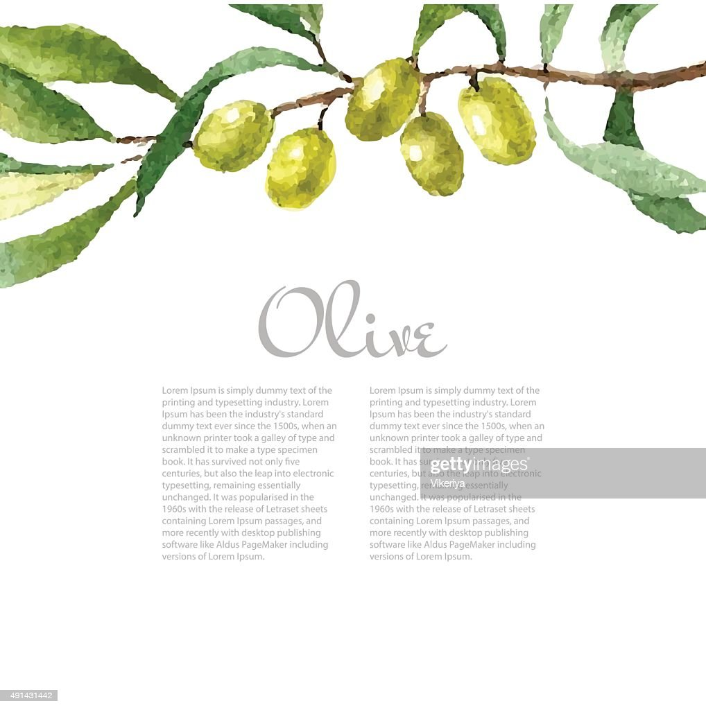 Watercolor olive branch background. Hand drawn natural vector elements.