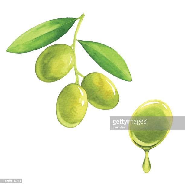 watercolor olives - olive fruit stock illustrations