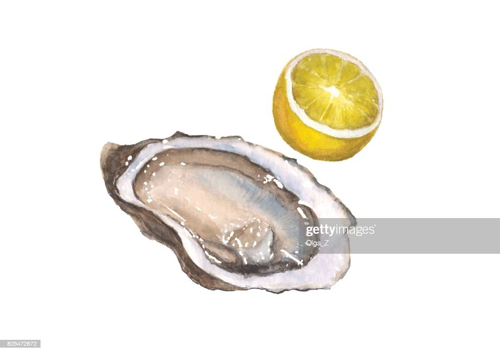 Watercolor oyster and lemon, isolated on white