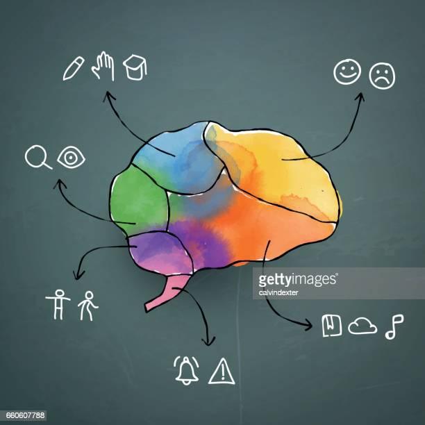ilustrações, clipart, desenhos animados e ícones de aquarela pintada cérebro humano e ícones representando a função das partes - lobo temporal