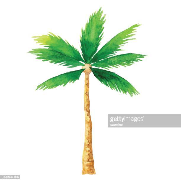 watercolor palm tree - coconut leaf stock illustrations, clip art, cartoons, & icons