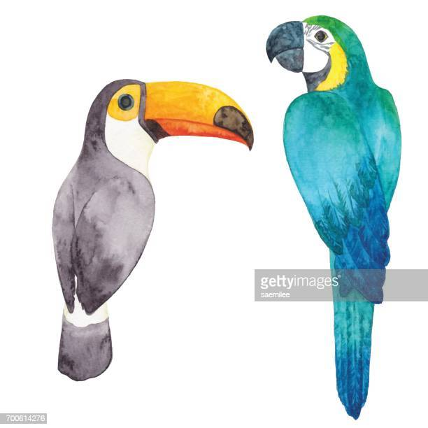 Illustrations Et Dessins Animes De Toucan