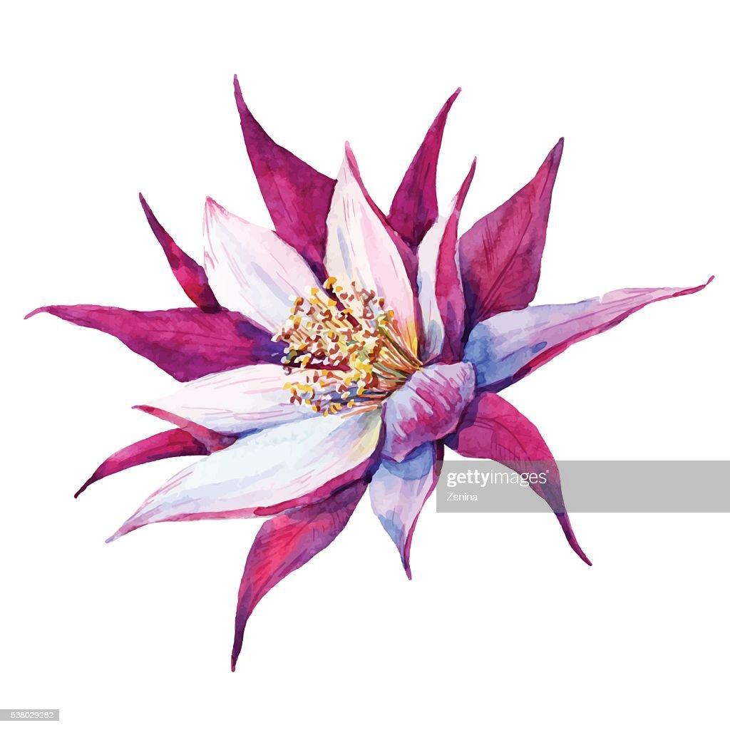 Watercolor Pataya Dragon Flower Vector Art Getty Images