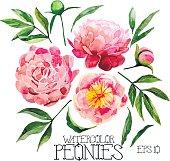 Watercolor peonies set