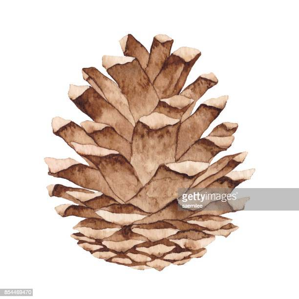watercolor pine cone - cone shape stock illustrations