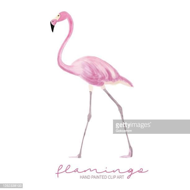 ilustrações de stock, clip art, desenhos animados e ícones de watercolor pink flamingo portrait, side view. tropical exotic bird background, tropical summer concept, design element. - flamingo