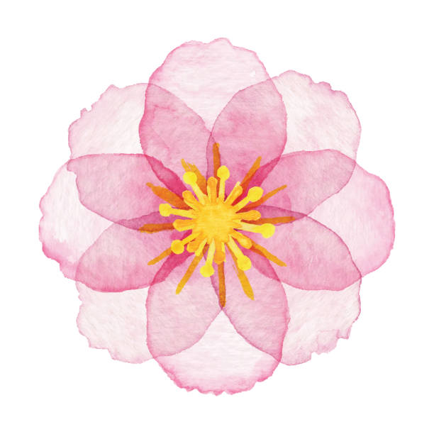 watercolor pink flower - pink stock illustrations