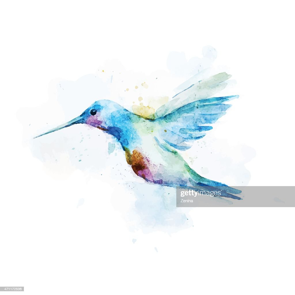 Watercolor portrait of a Colibri Bird on a white background