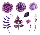 Watercolor purple flowers vector
