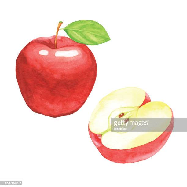 ilustraciones, imágenes clip art, dibujos animados e iconos de stock de manzanas rojas de acuarela - manzana