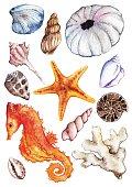 Watercolor sea ocean seahorse seashell coral ammonit urchin set vector