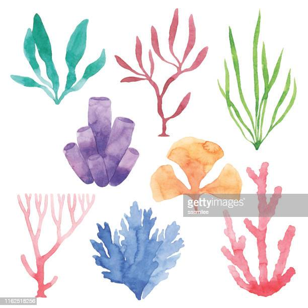 illustrations, cliparts, dessins animés et icônes de ensemble de plantes marines d'aquarelle - couleur corail