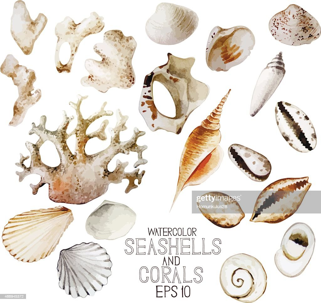 Watercolor seashells and corals
