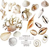 Watercolor seashells and corals