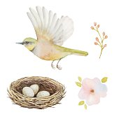 Watercolor set of bird and nest with eggs.