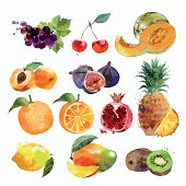 watercolor set of fruits