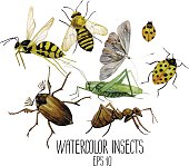 Watercolor set of insects