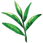 Watercolor sketch green leaves