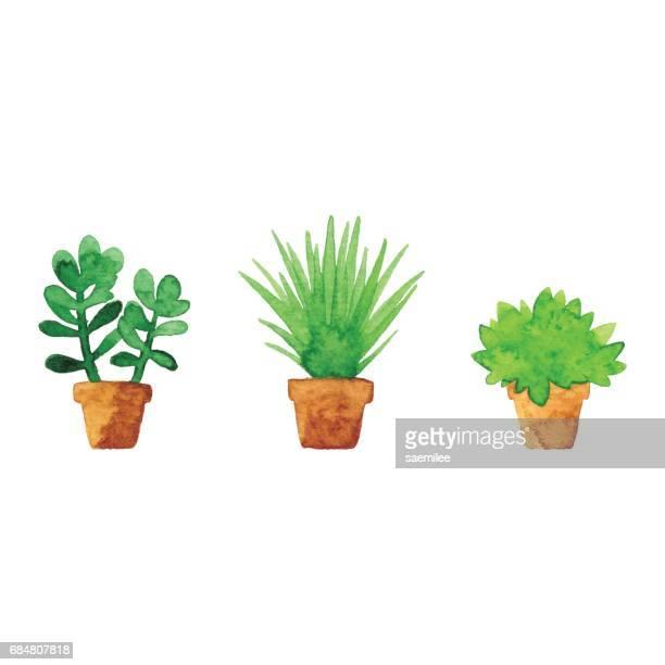 illustrations, cliparts, dessins animés et icônes de plantes en pot de petite aquarelle - plante verte