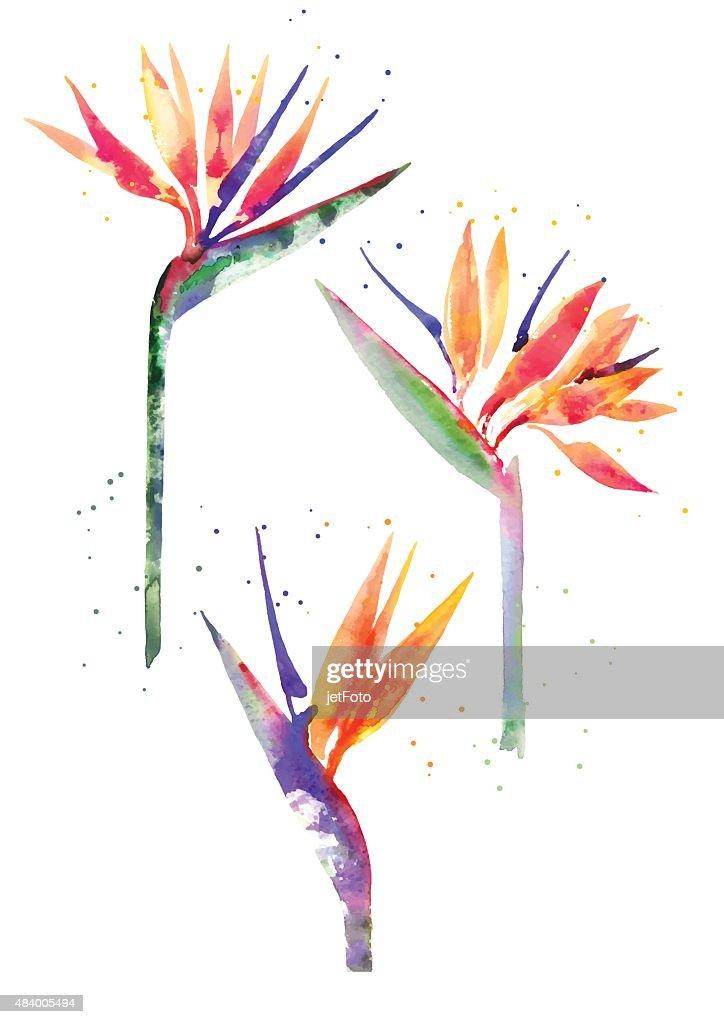 Watercolor Strelitzia flower