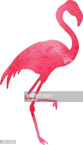 watercolor textured pink flamingo on white background - flamingo stock illustrations, clip art, cartoons, & icons
