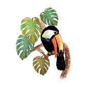 Watercolor tropical bird toucan with leafs