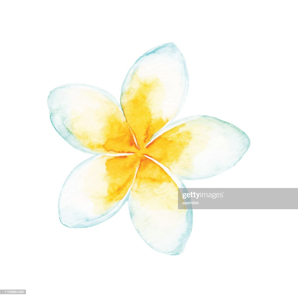 Watercolor Tropical Flower : stock illustration