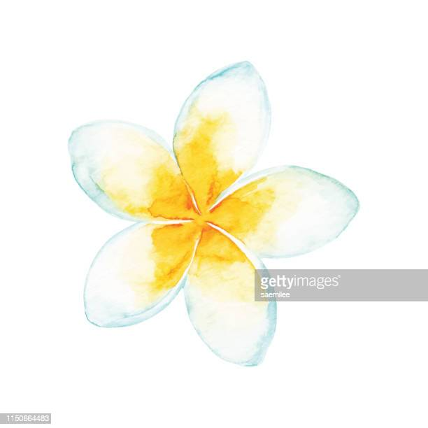 watercolor tropical flower - single flower stock illustrations