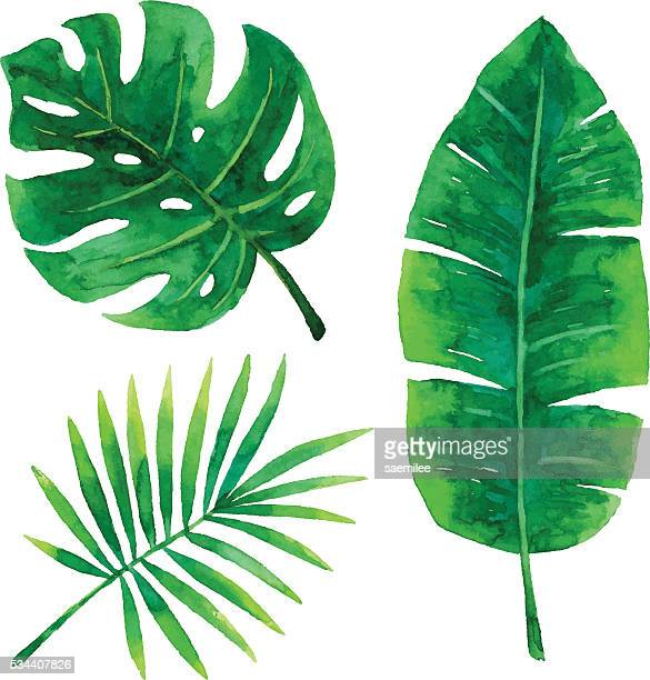 watercolor tropical leaves - tropical bush stock illustrations