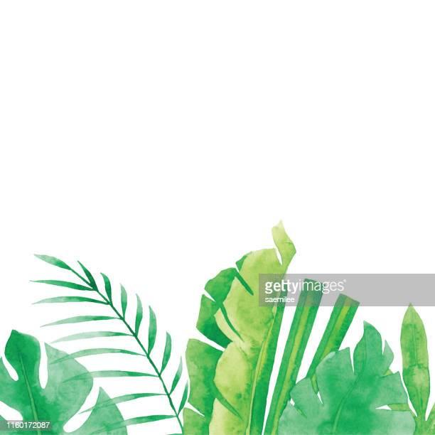 illustrations, cliparts, dessins animés et icônes de fond de plantes tropicales d'aquarelle - palmier
