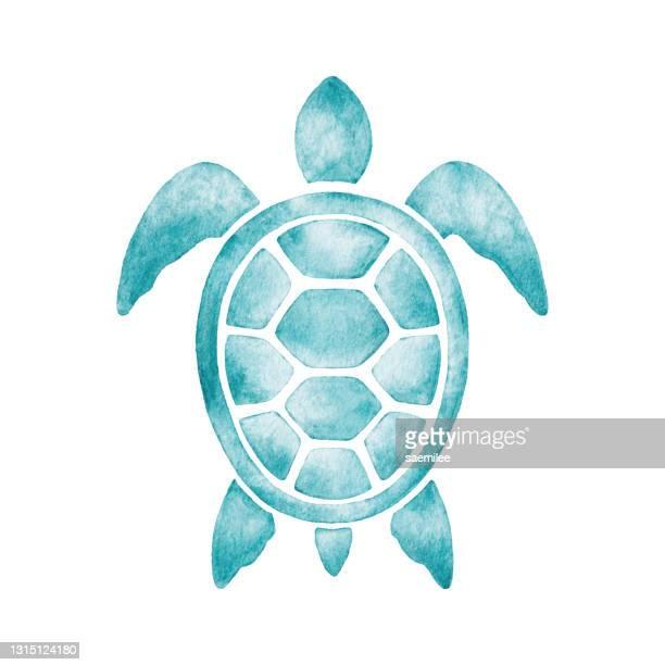 watercolor turtle - aquatic organism stock illustrations