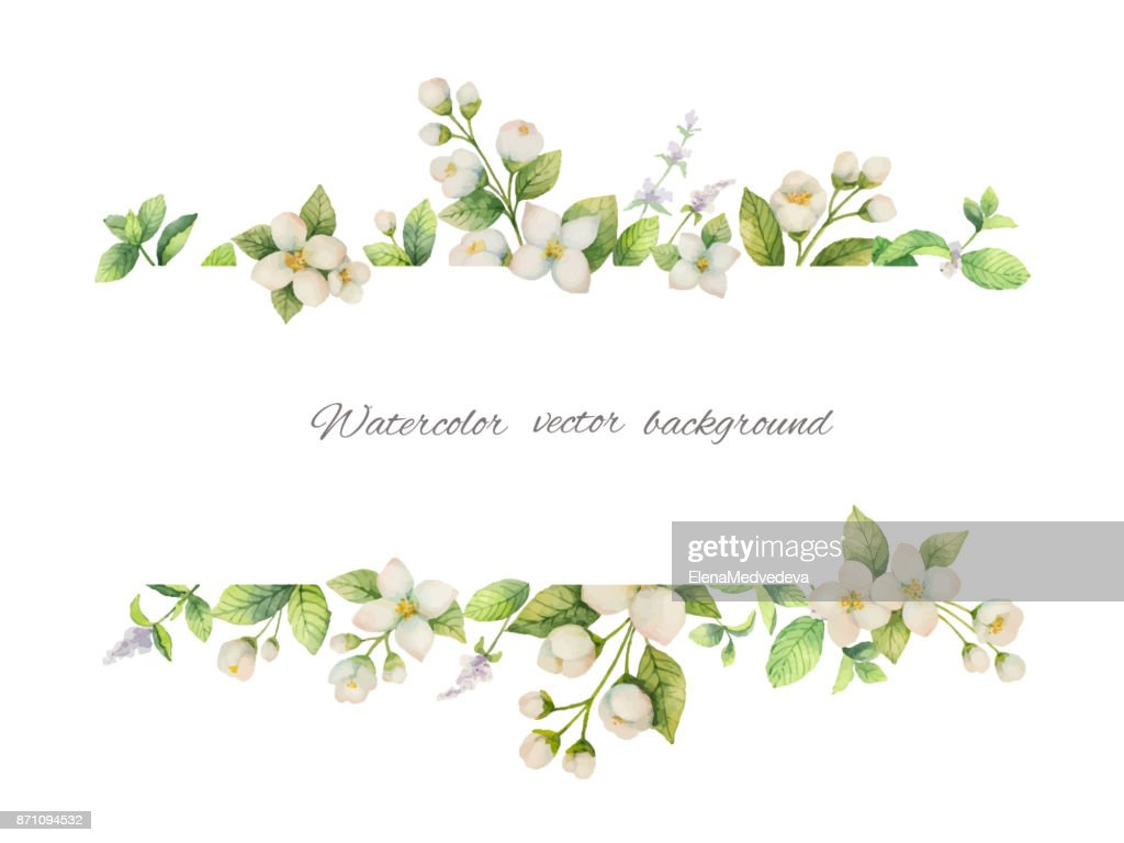 Watercolor vector banner of flowers Jasmine and mint branches isolated on white background.