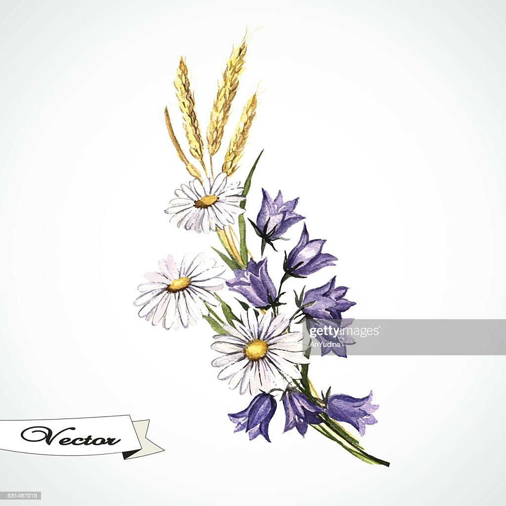 Watercolor vector bouquet with wild flowers