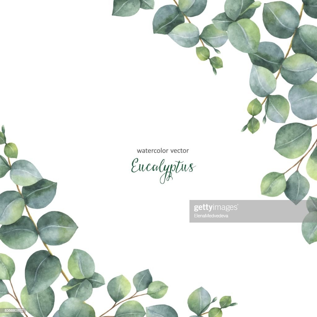 Watercolor vector green floral card with silver dollar eucalyptus leaves and branches isolated on white background.