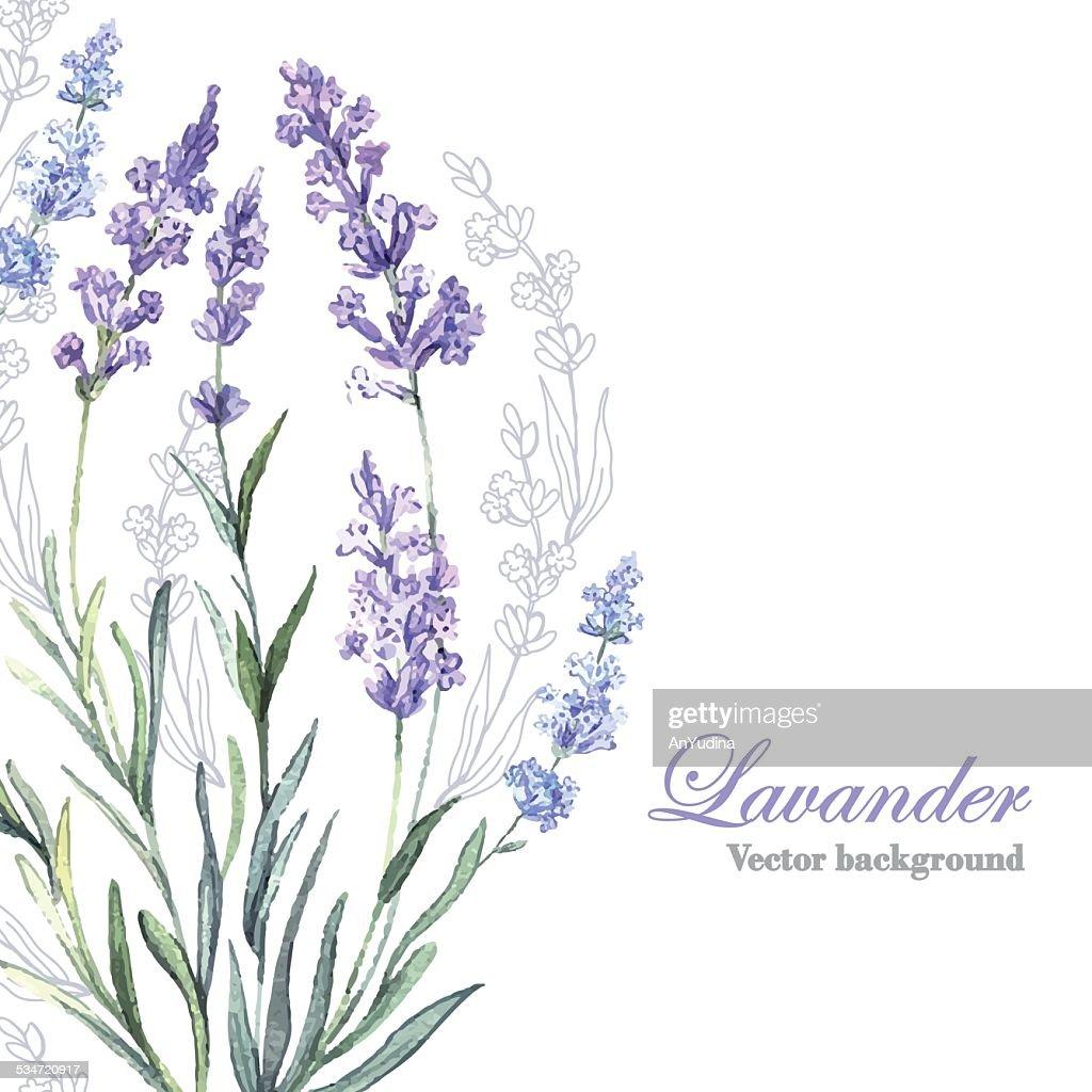 Watercolor vector Lavender background