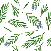 Watercolor vector seamless pattern hand drawn herb rosemary.