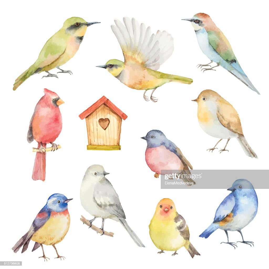 Watercolor vector set of birds.